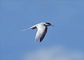 レッドデータブックの鳥
